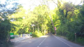 Condução em Forest Road vídeos de arquivo