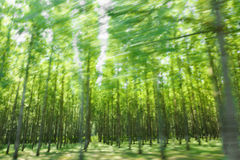 Condução pela floresta verde no borrão de movimento Imagens de Stock