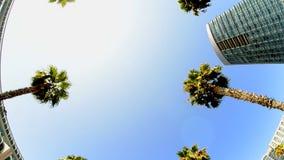 Condução tropical das palmeiras de Califórnia filme