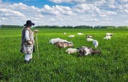 Conduca e gregge delle capre su un pascolo Immagini Stock
