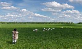 Conduca e gregge delle capre su un pascolo Fotografia Stock