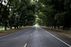 Conducción abajo del camino de las granjas de la pacana foto de archivo