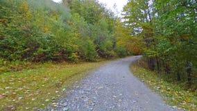 Conducción de la carretera con curvas en montañas a través de bosque