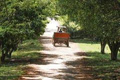 Conducción de un tractor en una granja Imágenes de archivo libres de regalías