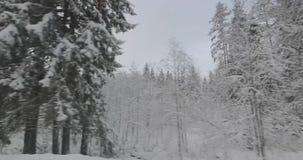 Conducción en coche en bosque del invierno almacen de video