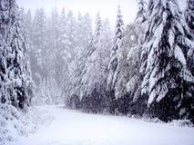 Conducción en el camino de la montaña imagen de archivo libre de regalías
