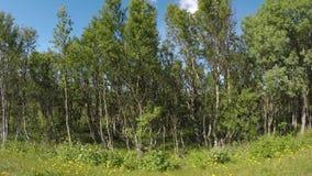 Conducción en el camino forestal con el bosque diverso dañado del árbol metrajes