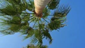 Conducción a través de las palmeras en Beverly Drive almacen de metraje de vídeo