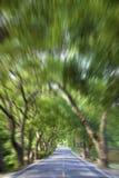 Conducción a través del bosque verde Foto de archivo libre de regalías