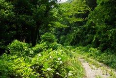 Conducción a través de bosque profundo Imagenes de archivo