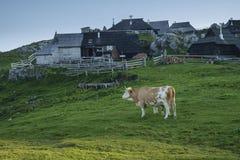 Conduce le capanne su Velika Planina Fotografia Stock Libera da Diritti