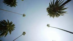 Conduciendo a través de las palmeras en Beverly Drive, tiro ancho de los sunlights de la pizca del cielo azul Beverly Hills almacen de video