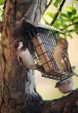 Conducteur d'oiseau Photo stock