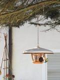 Conducteur d'oiseau avec manger la mésange bleue Photographie stock libre de droits