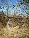 Conducteur d'oiseau d'une bouteille en plastique Image libre de droits