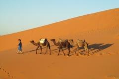 Conducteur de chameau avec la caravane de touristes de chameau Photographie stock libre de droits