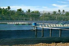 Conducteur de crevette dans l'étang extérieur de crevette de fond d'étang de crevette nuageux photo libre de droits