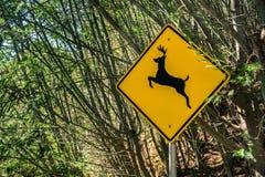 Conducteurs d'avertissement d'un signe que les cerfs communs peuvent courir à travers la route Photo stock