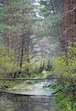 Conducto del bosque imagen de archivo