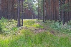 Conducto del bosque Fotografía de archivo libre de regalías