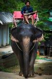 Conductor del elefante Imágenes de archivo libres de regalías