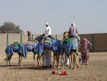 Conductores del camello dubai imagen de archivo