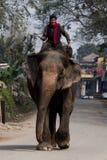 conduite d'éléphant Image libre de droits