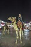 Conduite d'un chameau Photographie stock libre de droits