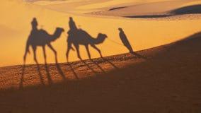 Conduite de chameau sur le désert de Sahara, Maroc Photos stock