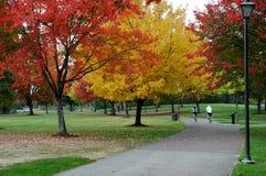 Conduite de vélo d'automne Photos libres de droits