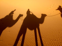 Conduite sur des chameaux images libres de droits
