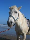 Conduites de poney par la mer photographie stock