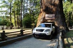 Conduzca a través de árbol Fotos de archivo