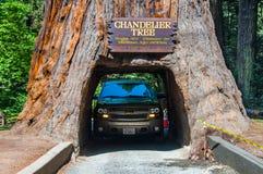 Conduzca a través de árbol Foto de archivo