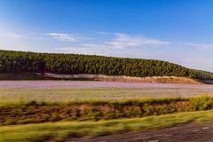 Conduzindo a estrada ao longo do campo da alfazema Fotos de Stock Royalty Free