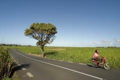 Conduzindo Maurício Fotos de Stock Royalty Free
