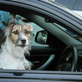 Conduzindo o cão Fotografia de Stock Royalty Free