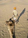 Conduzindo o camelo Foto de Stock Royalty Free