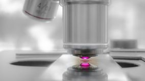Conduzindo uma experiência da observação usando um microscópio laser-suportado imagem de stock royalty free