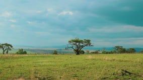 Conduzindo a vista ao viajar no safari em África do Sul vídeos de arquivo