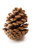 Cone. Detail of a pine cone Royalty Free Stock Image
