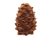 Cone. Pine cone isolated on white background. See my other cones Royalty Free Stock Photography