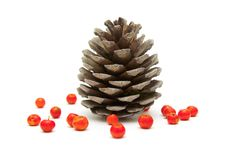 Cone and ashberry Royalty Free Stock Photo