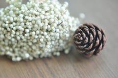 Cone borrado do pyne ao lado da flor seca fotos de stock royalty free