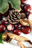 Cone and Chestnut isolated in Royalty Free Stock Photos