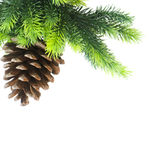 Cone and christmas tree Stock Photography
