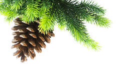 Cone and christmas tree isolated Royalty Free Stock Photography