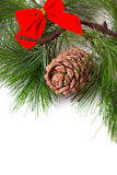 Cone and christmas tree isolated Royalty Free Stock Image