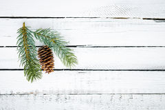 Cone and conifer Royalty Free Stock Photos