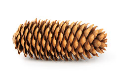 Cone de abeto Fotos de Stock